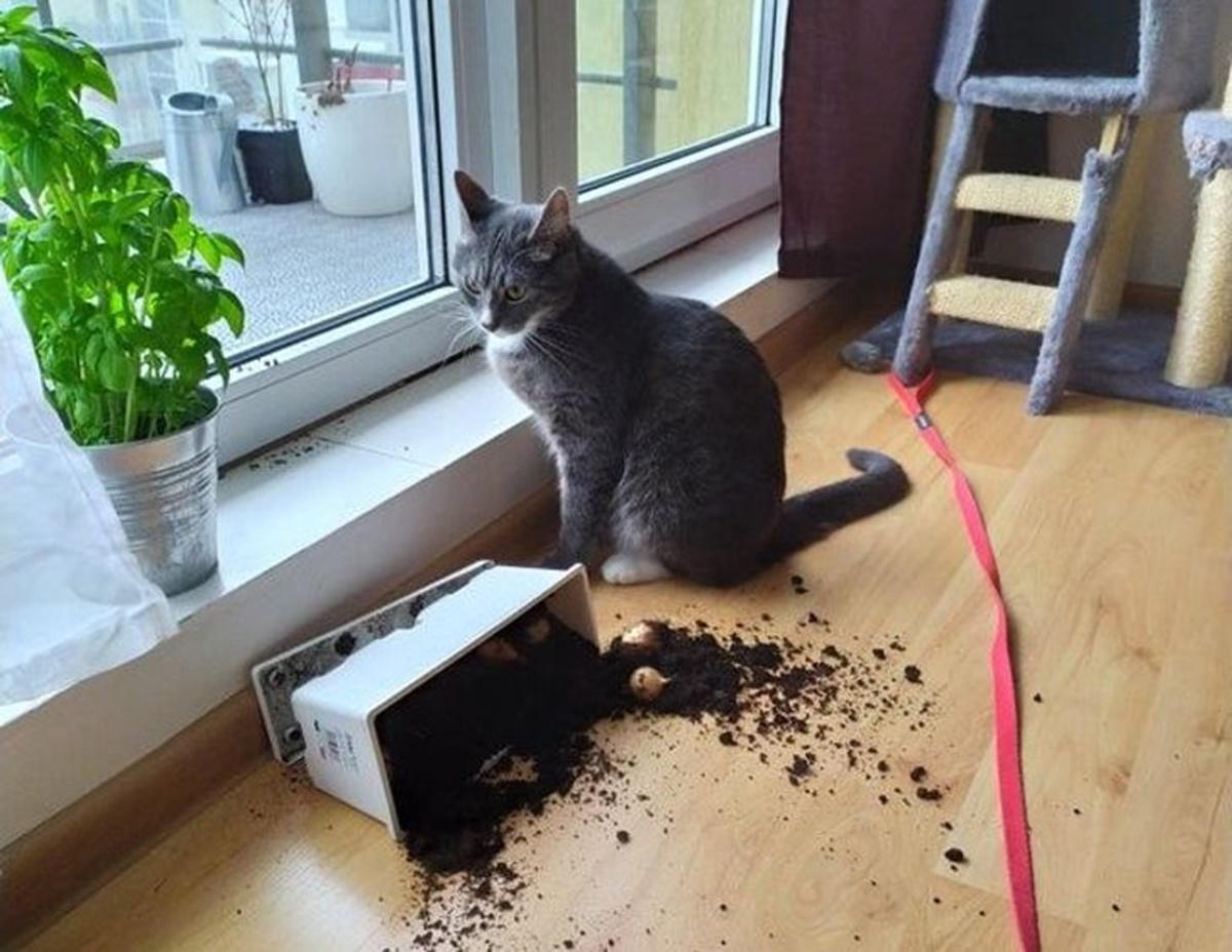 gatto vaso