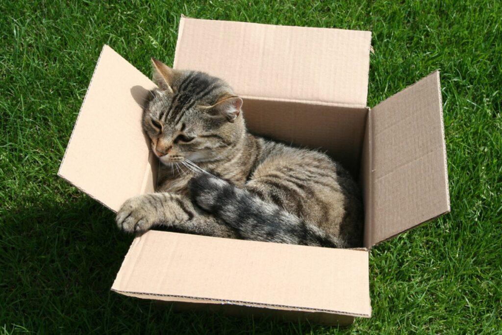 micio scatola cartone