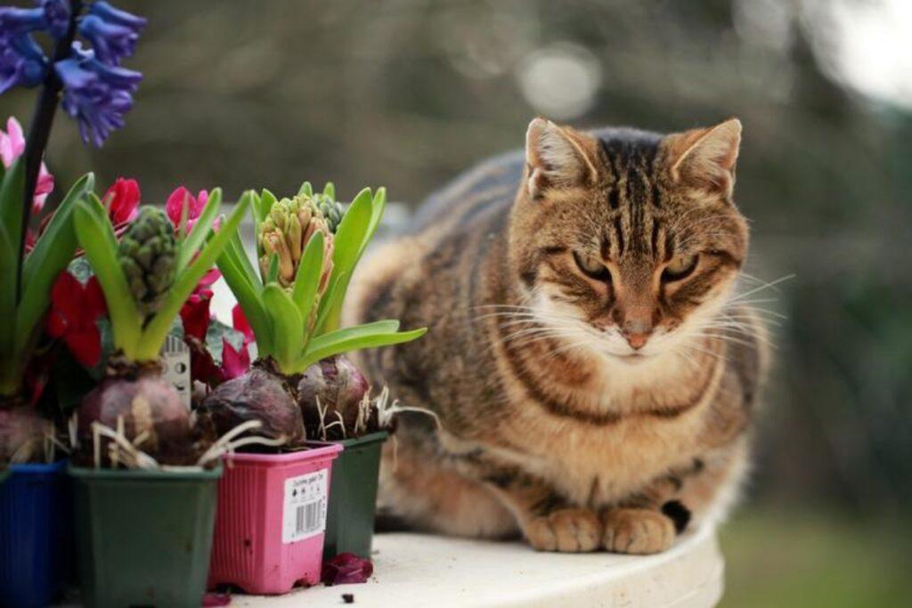 gatto vaso piante