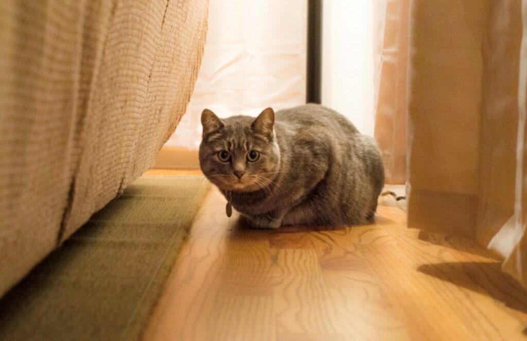 gatto osserva sguardo