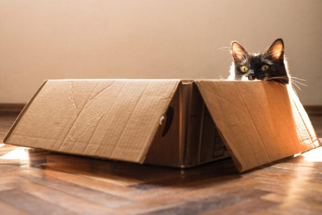 gatto scatola cartone