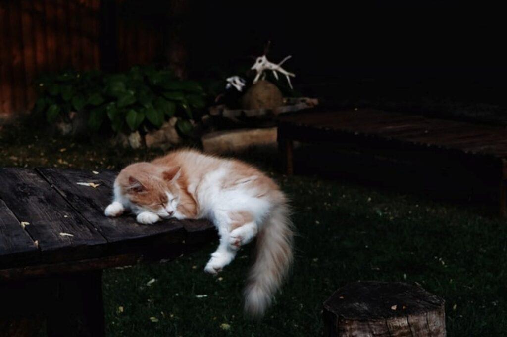 gatto tavolo dorme