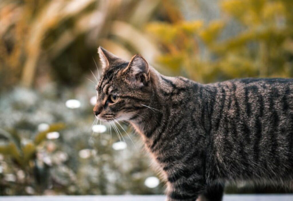 gatto soriano fuori