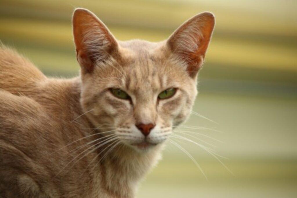 gatto sguardo socchiuso