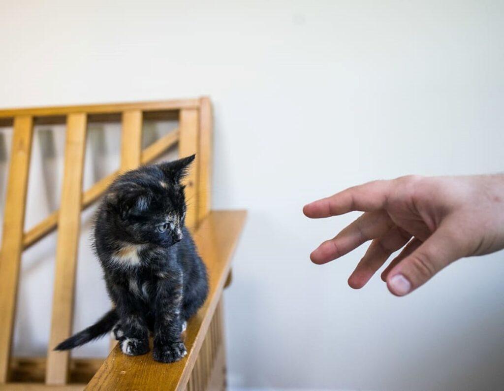 micio mano ringhiera
