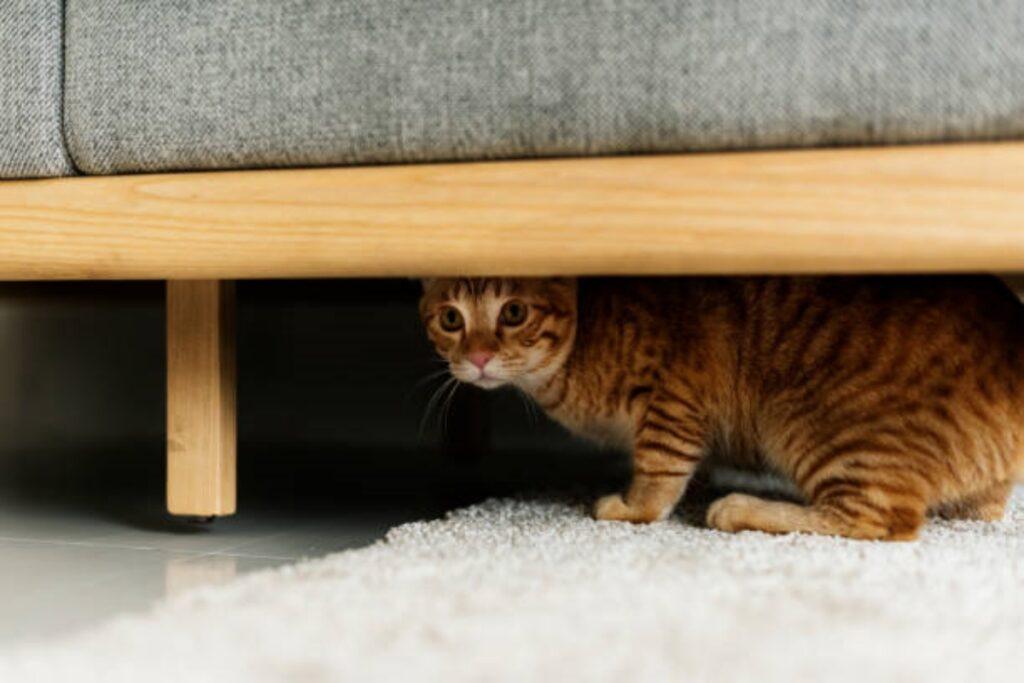 gatto paura letto