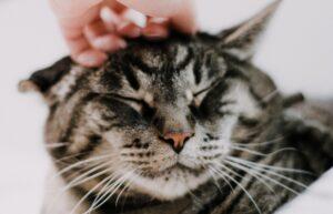 gatto dolcissimo muso