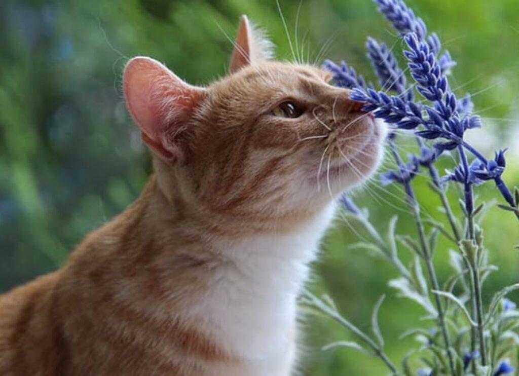micio annusa fiore