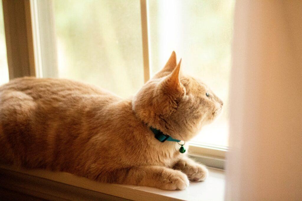 gatto stupendo finestra
