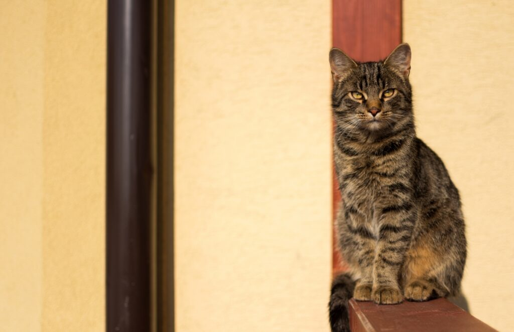 gatto seduto casa