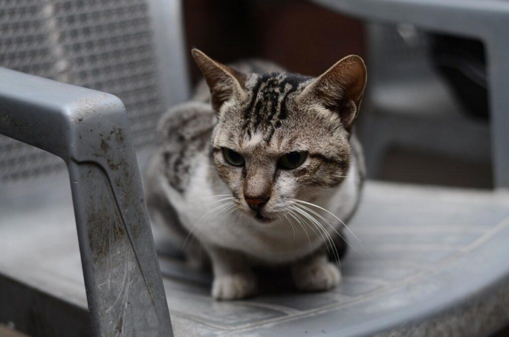 gatto sedia seduto
