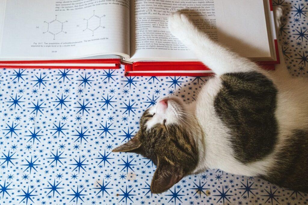gatto libro dormire
