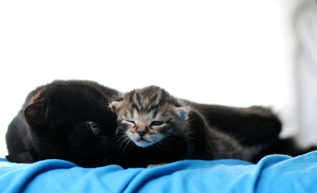 micetto mamma dormire