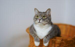 felino zampe seduto