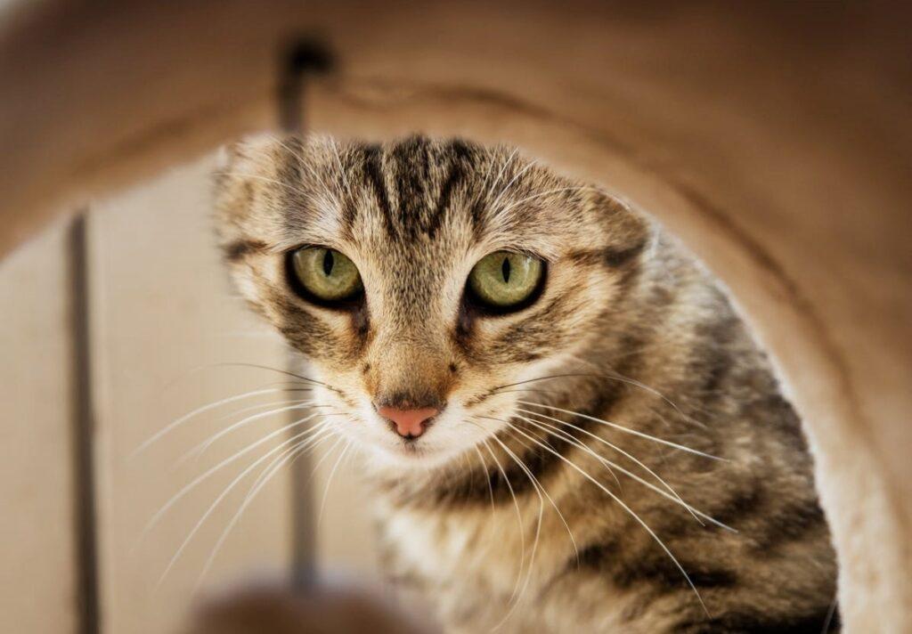 gatto osserva fotocamera