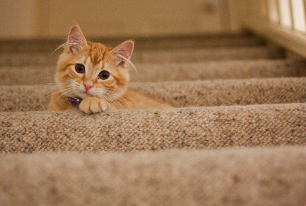 gatto scale paura