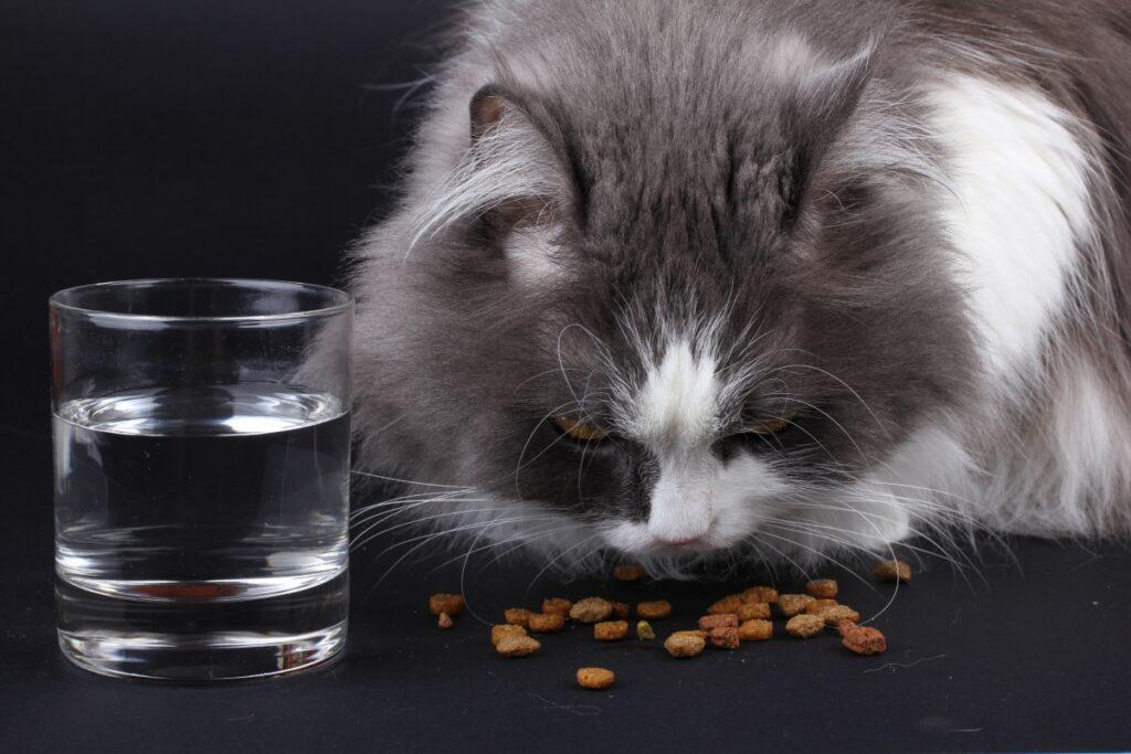 felino cibo pappa