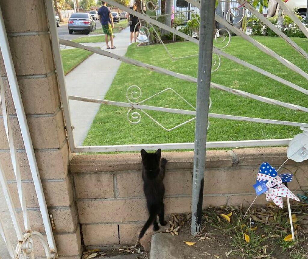 gattino nero appoggiato ringhiera