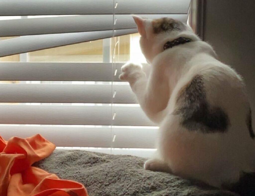 gattino sbircia esterno casa