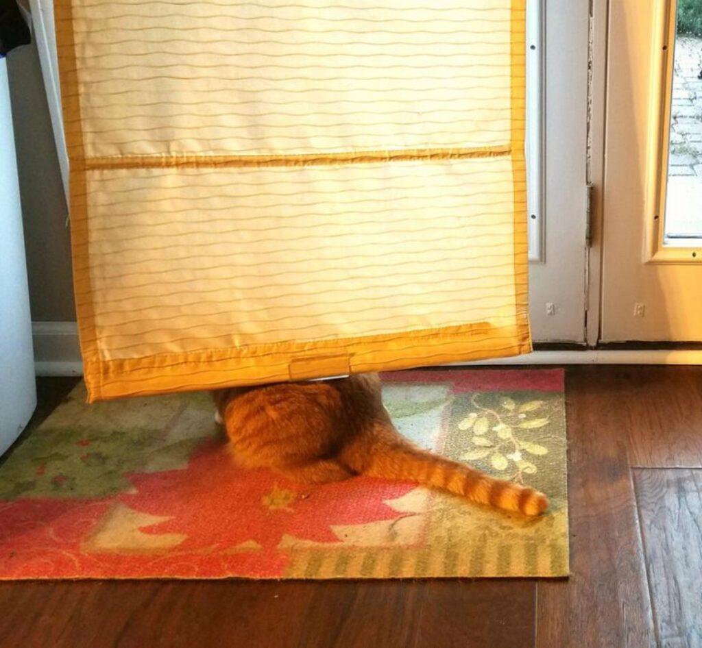 felino tenda dietro