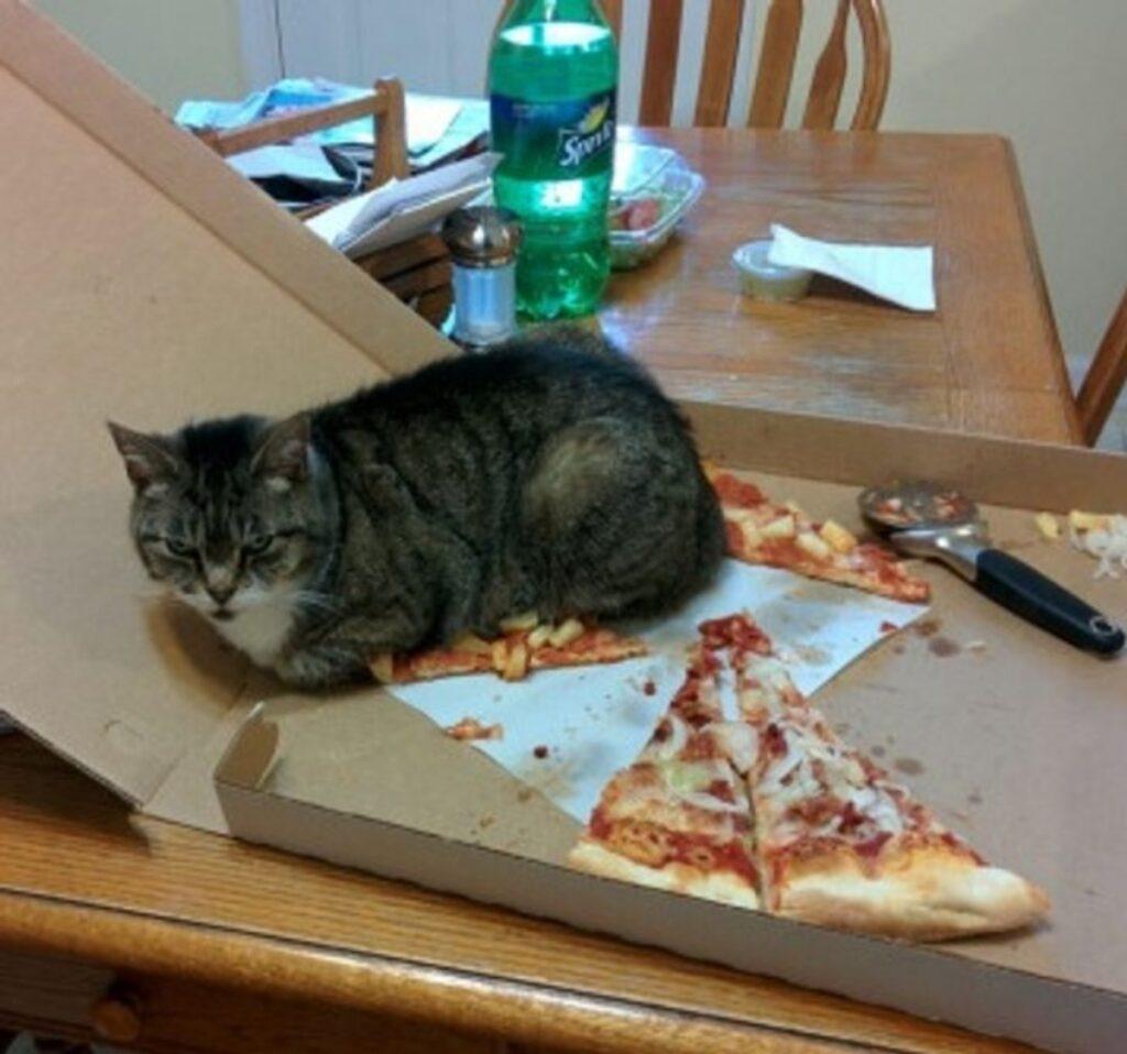 felino pezzi pizza