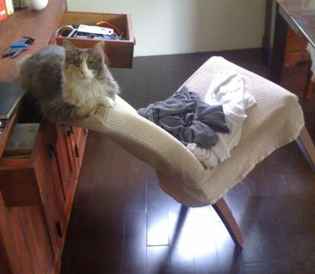 gatto sedia equilibrio