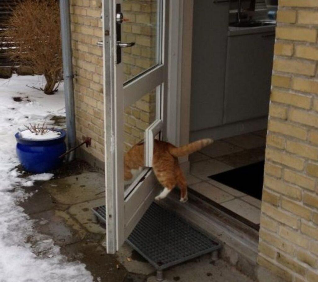 gatto porta casa
