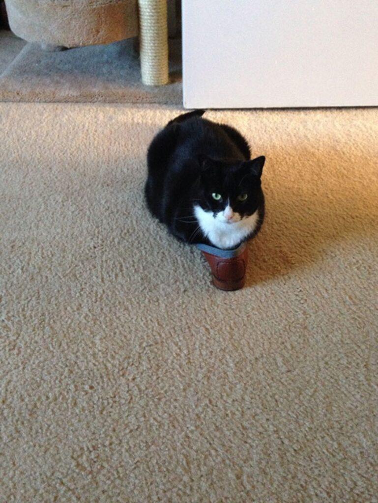 gattino dolce colorato