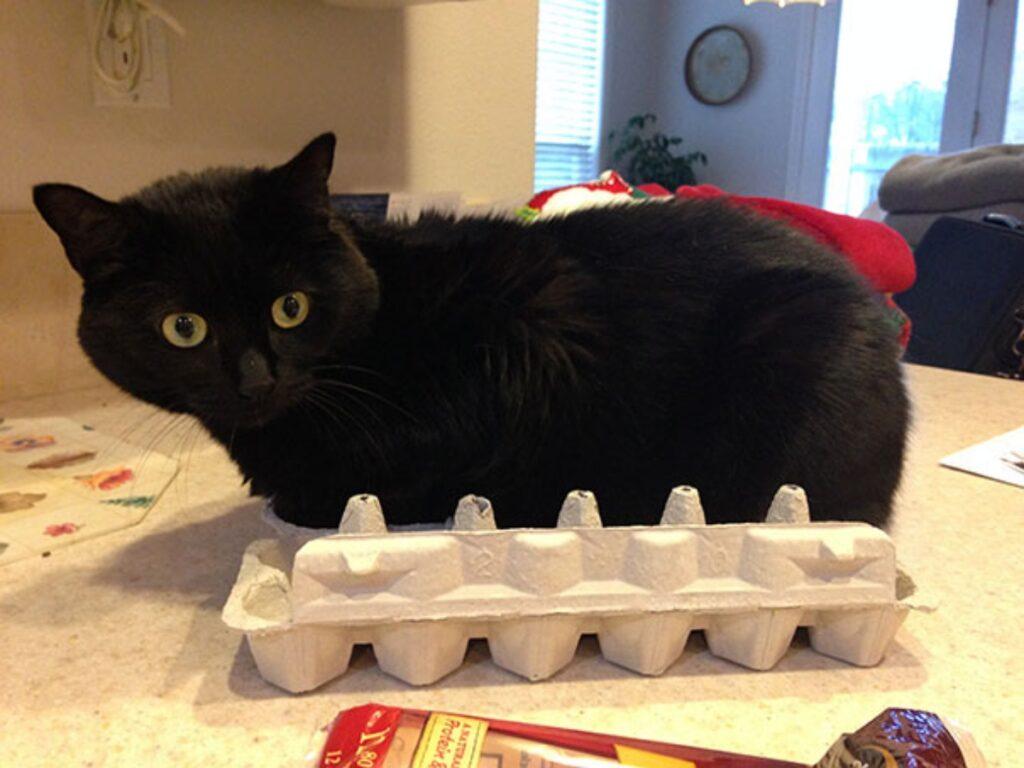 gatto nero uova