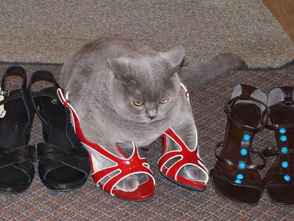 felino prova sandali