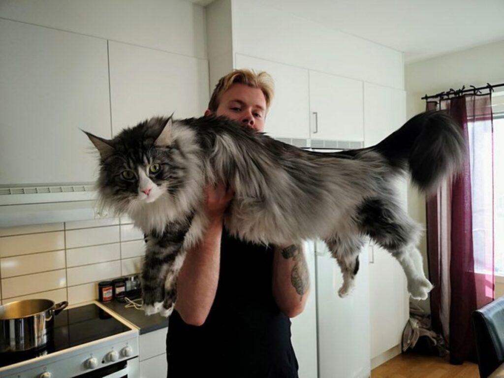 gatto papà in braccio