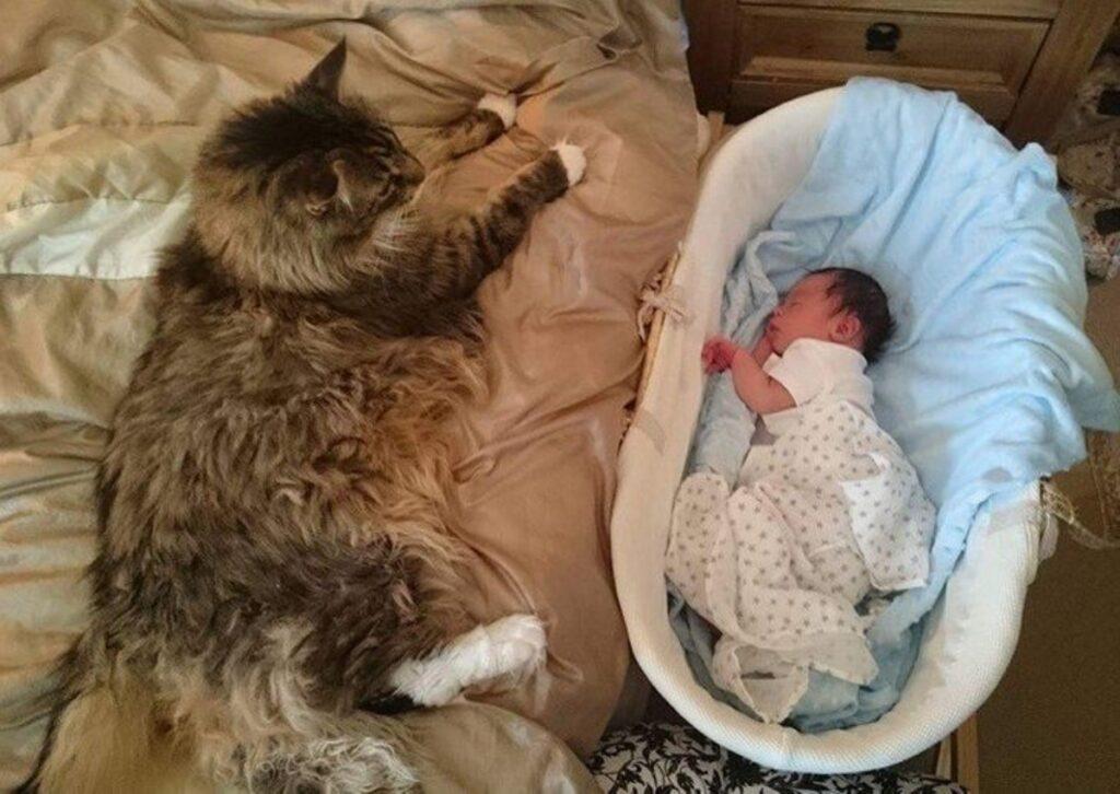 bimbo gatto coppia
