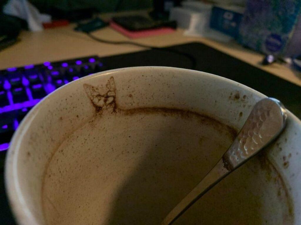 gatto bordo tazza