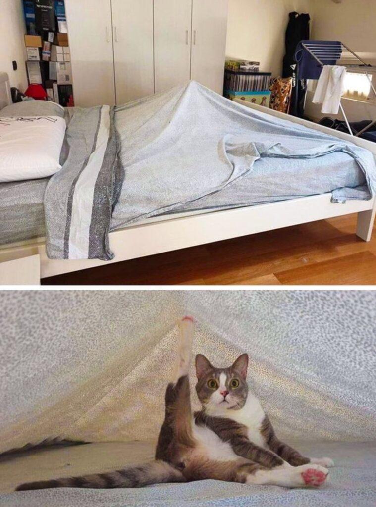 micio sotto lenzuolo