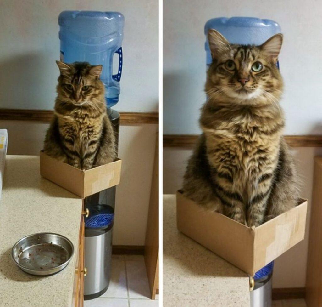 felino scatola seduto