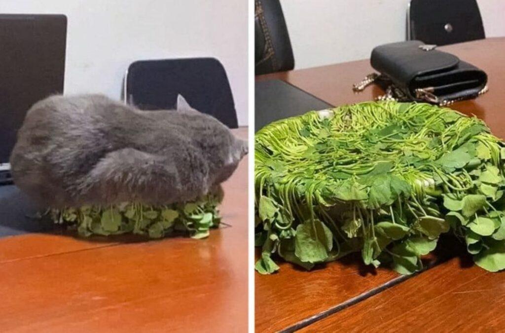 felino pianta simpatico