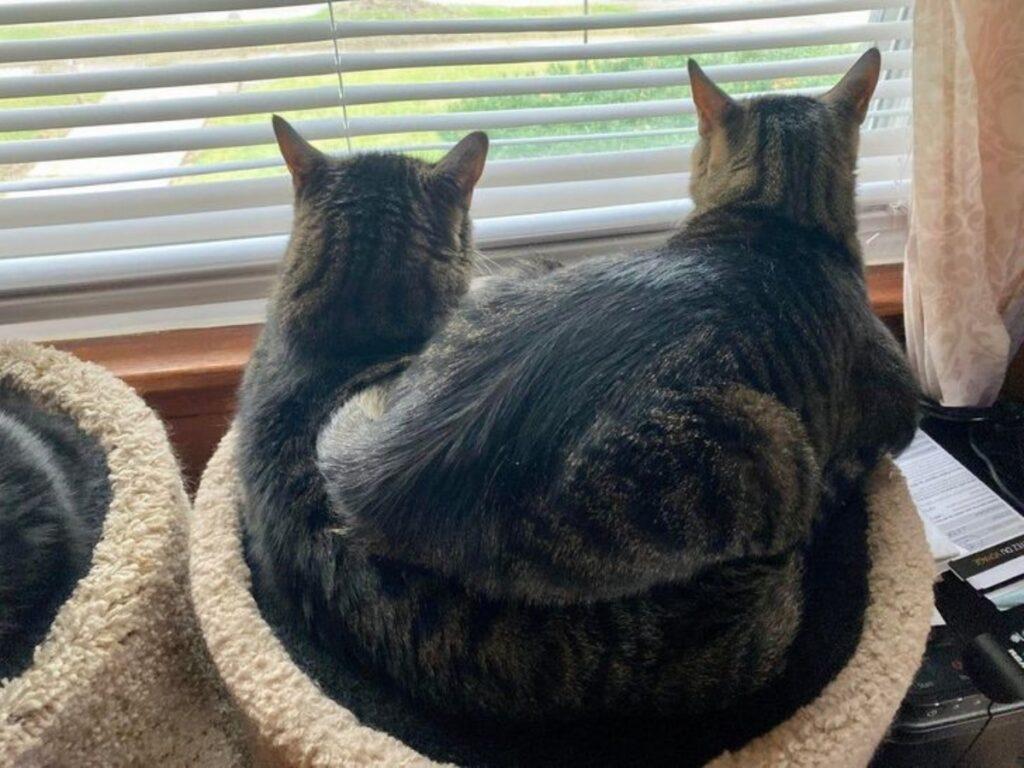 gatti stessa cuccia