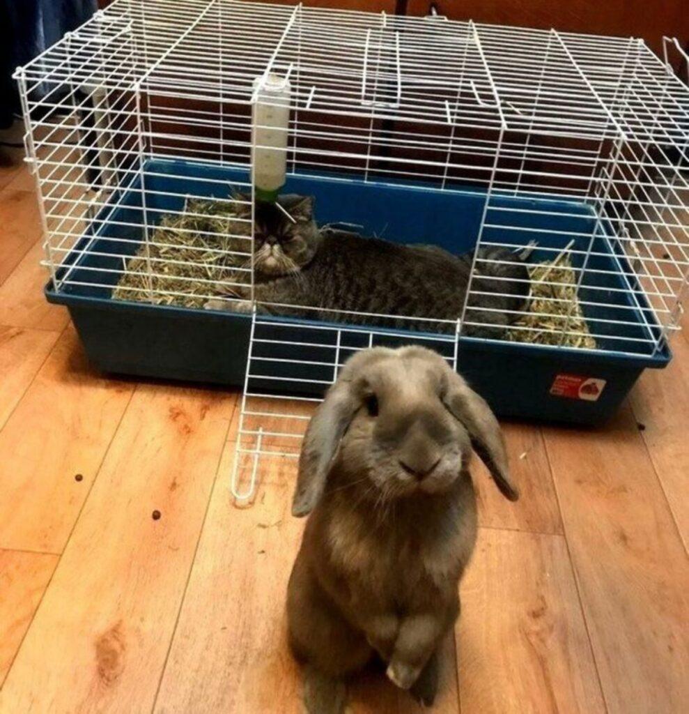 coniglio gatto gabbia