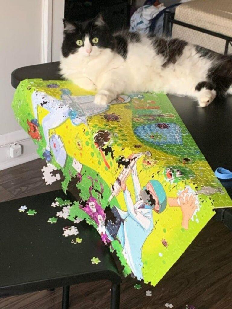 micio puzzle divertente