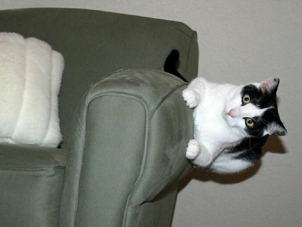 gatto aggrappato divano