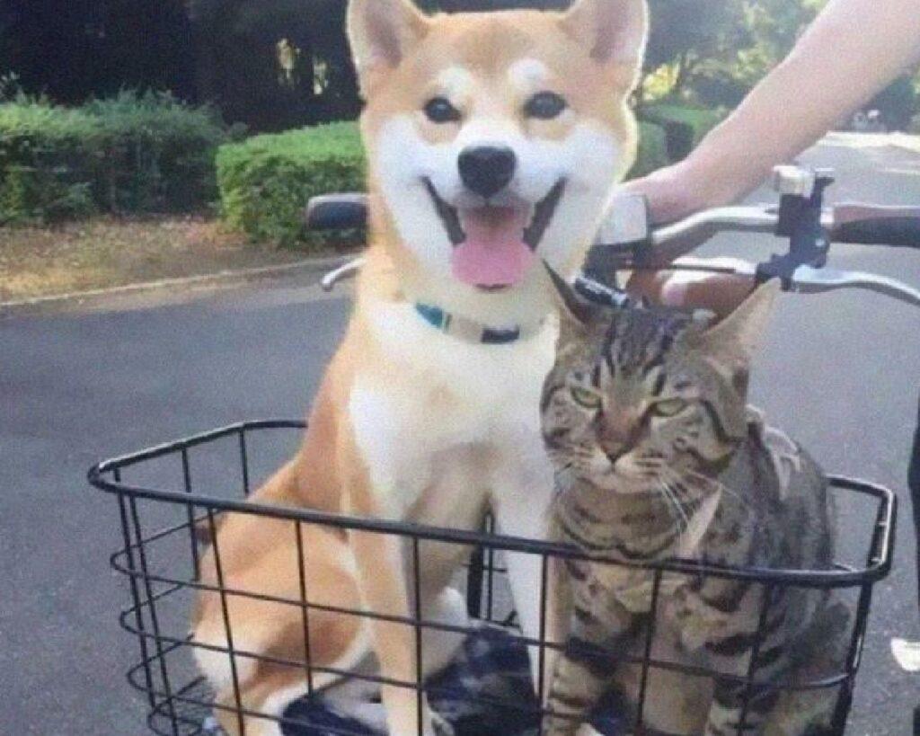 gatto con cane su bici