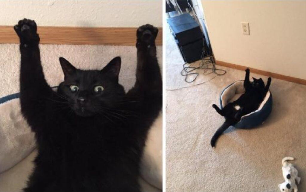 gatto nero alza zampe