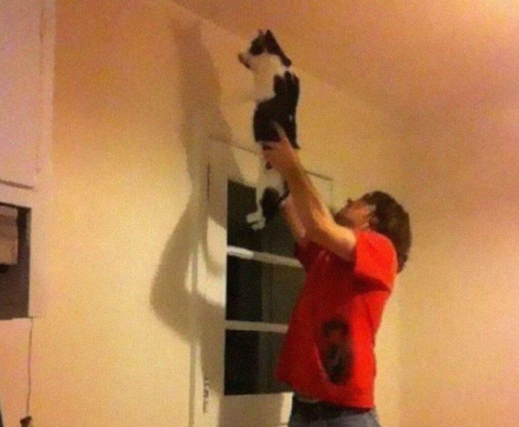 gatto scaccia insetti in alto