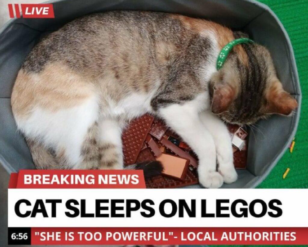 gatto dentro cesto lego