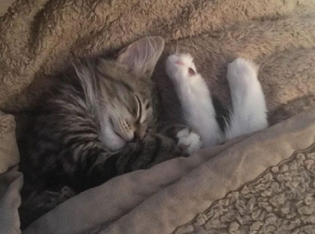 gatto dorme con zampe fuori lenzuola