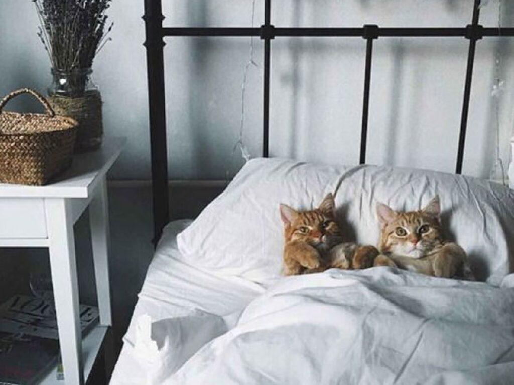 coppia gatti letto vintage