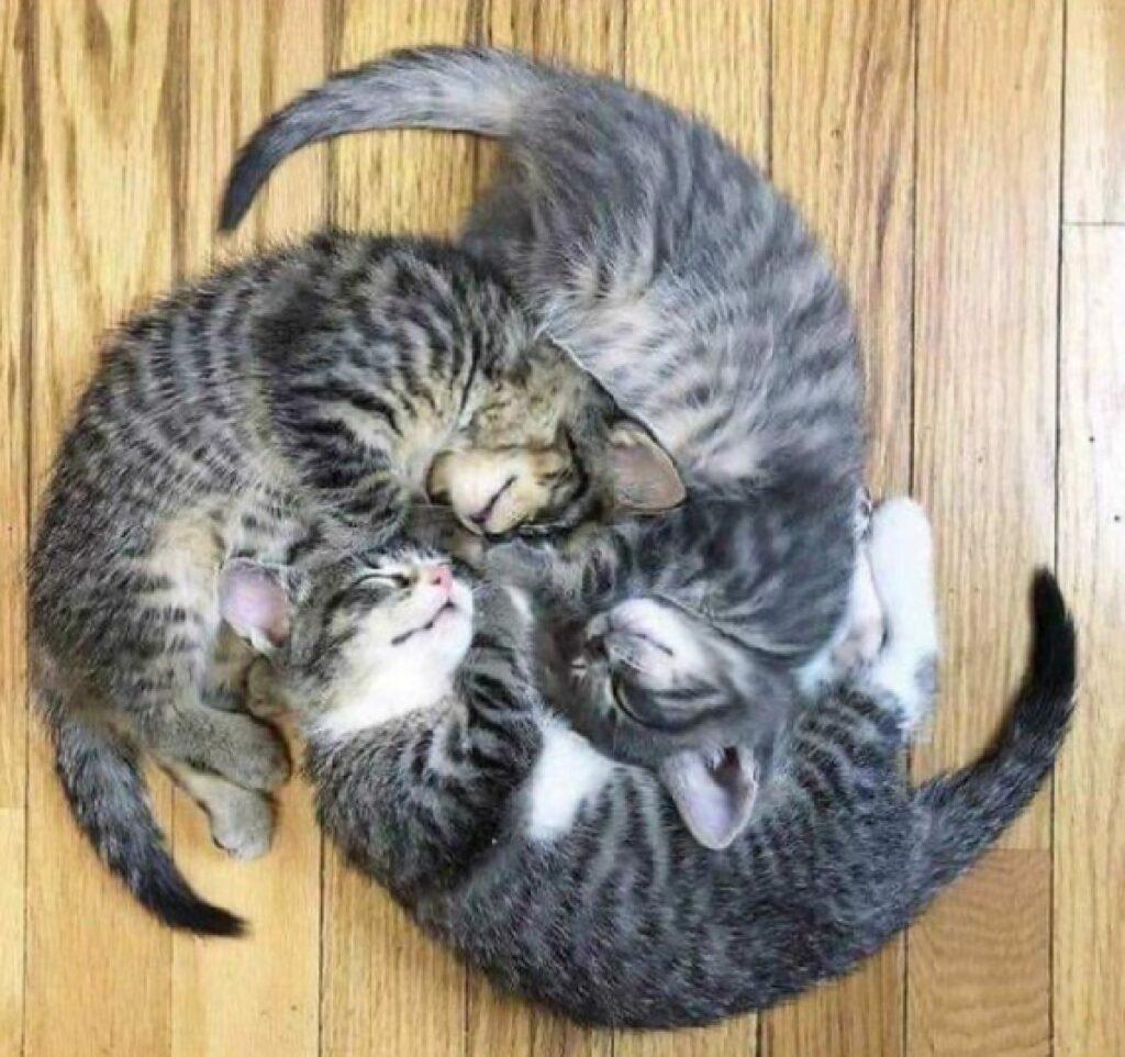 tre gatti soriano circolo