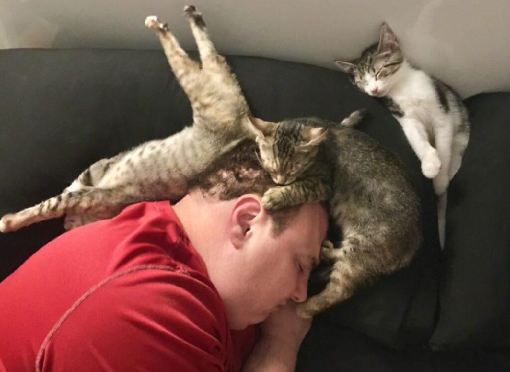 gatti dormono sopra papà
