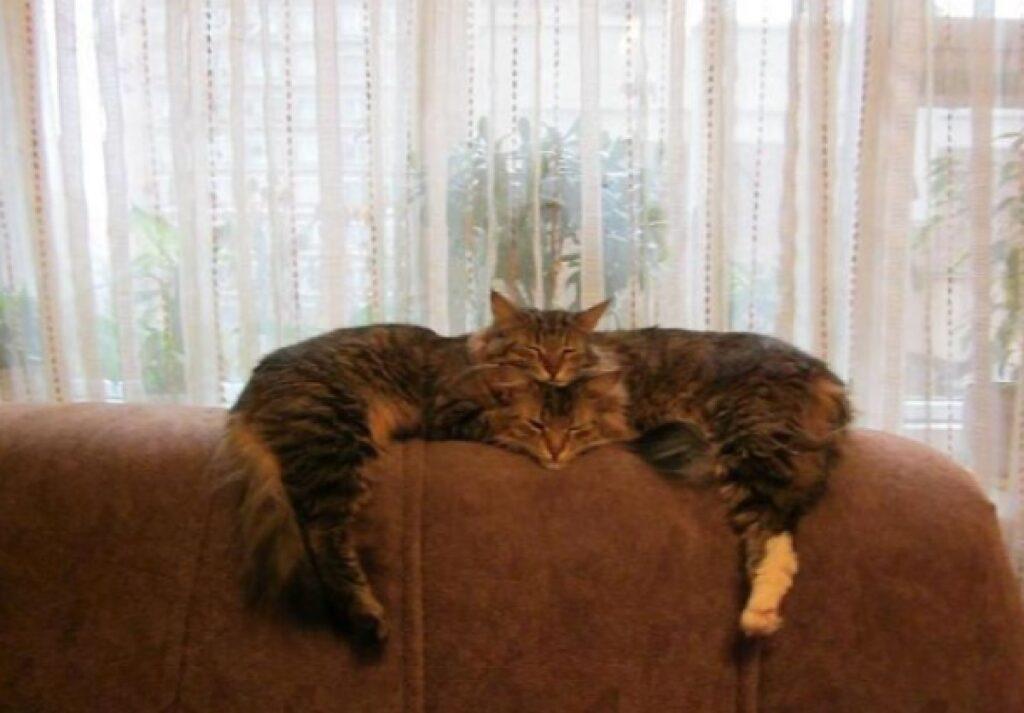 gatti testa una sull'altra