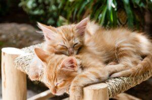 gatti adorano dormire assieme